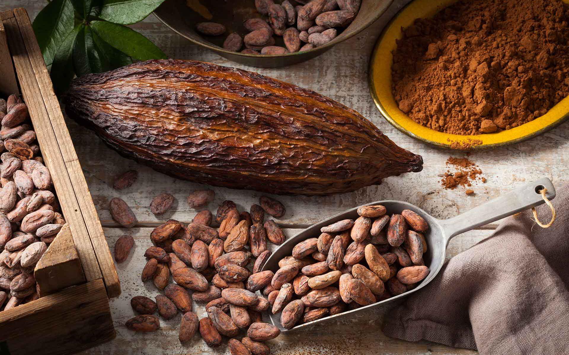 Kakaofrucht, Kakobohne und gemahlener Kakao mit Zubehör auf einem Tisch