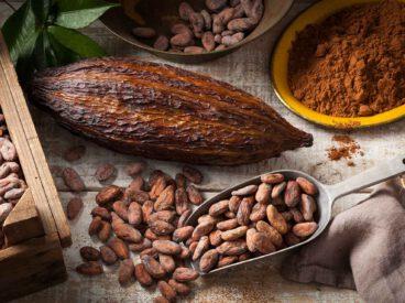 Der Kakao/Cocoa und sein Ursprung